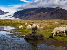 singlereis-zuid-ijsland-in-de-zomer