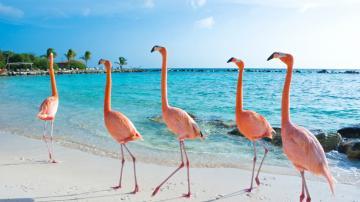 Singlereis zonvakantie Bonaire