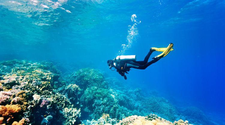 Duikvakanties voor singles naar de mooiste duikplekken