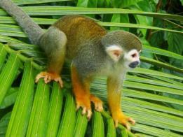 Singlereis Rondreis kleurrijk Suriname