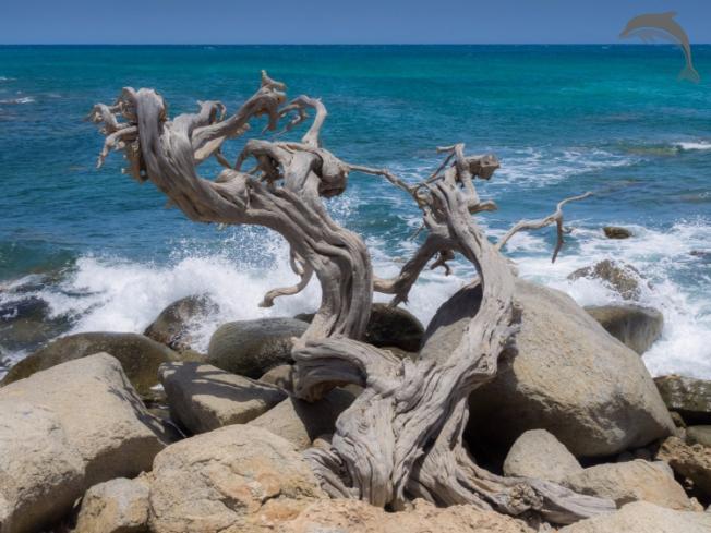 Singlereis Je mooiste vakantie naar Aruba (HBO+)