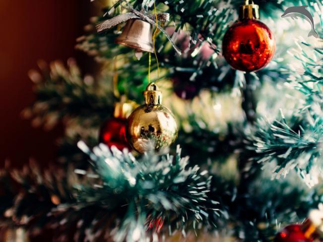Singlereis Vier Kerst in België