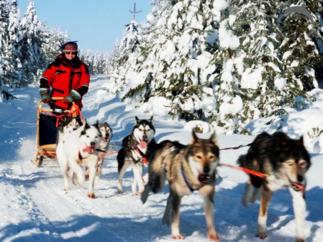 Singlereis Winterreis (HBO-WO) naar Lapland