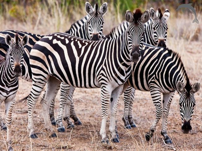 Singlereis Zuid-Afrika en Mozambique 15-daagse rondreis
