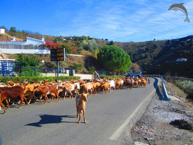 Singlereis Actief en Cultuur in Andalusie