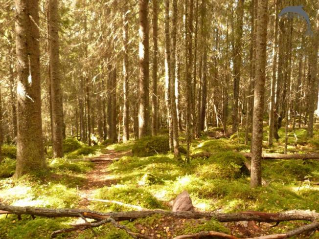 Groepsreis Actief Zweden wildernis