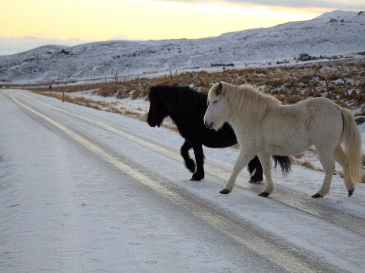 Groepsreis Actieve Winterreis IJsland