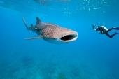 Singlereis Duikvakantie Filipijnen El Dorado Beach & Dive Resort - Filipijnen - Negros